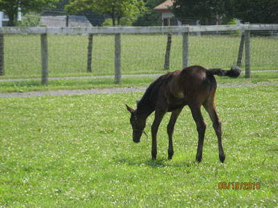 Cammy's New Foal